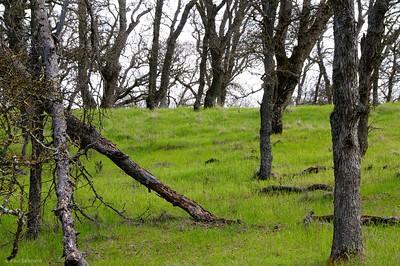 Oak grove on Oak Road