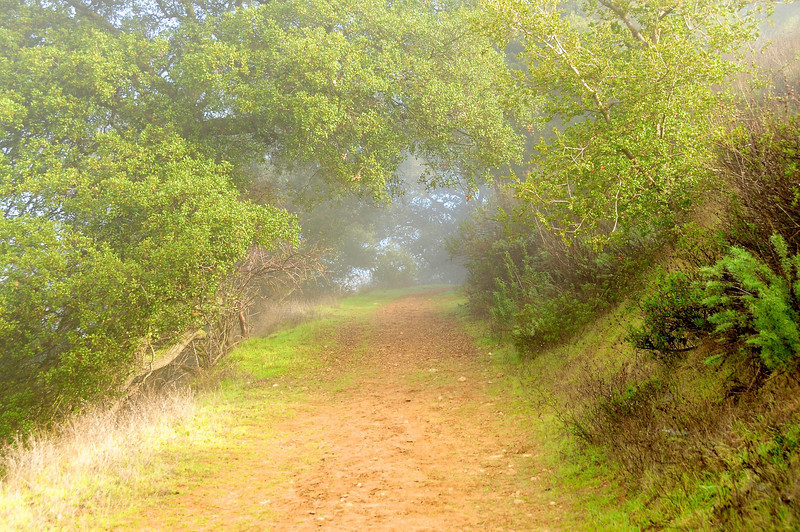 Foggy tunnel as I hiked to the ridge