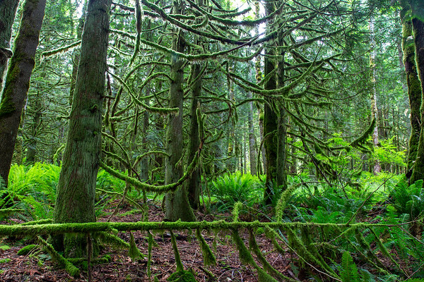 Nook Trail Loop Hike, Tiger Mountain State Forest, June 2, 2020