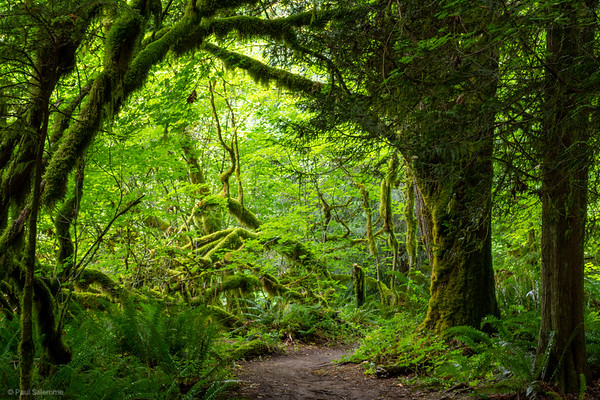 Northwest Timber Trail, July 9, 2020