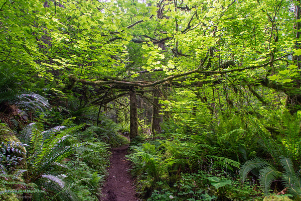Tiger Mountain, Dwight's Way Double Loop Hike, June 5, 2020