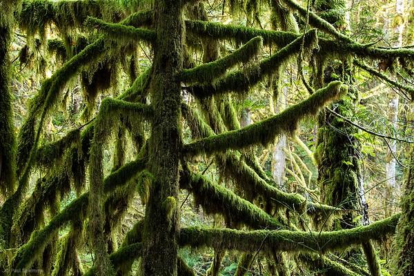 Woody Trail Part 2 - Wallace Falls State Park, Washington, November 28, 2015