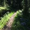 OTC portion of the Pacific Northwest Trail - 20 years after work was performed and without maintenance