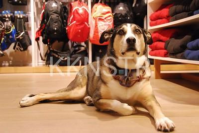 Roxy (Gary's best buddy) at home in Salomon.