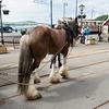 Horse Tram at Douglas