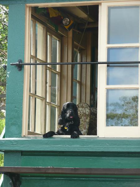 Canine Company for Rothley Signalman