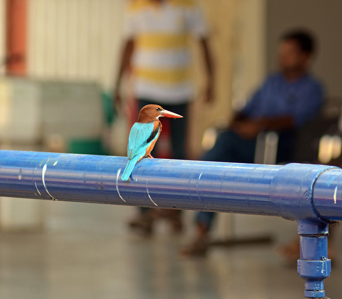 ...rather more surprisingly, this kingfisher.