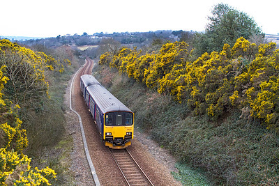 150123 has just crossed Perranwell Viaduct and enters a cutting of Gorse bushes forming the 16.20 2T84 Falmouth Docks to Truro. Thursday 4th April 2013.
