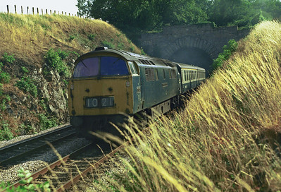 D1021 'Western Cavalier' bursts from Dainton Tunnel with an up express for Paddington. The brown grass is a reminder of how hot and dry that summer was. 23/7/76.