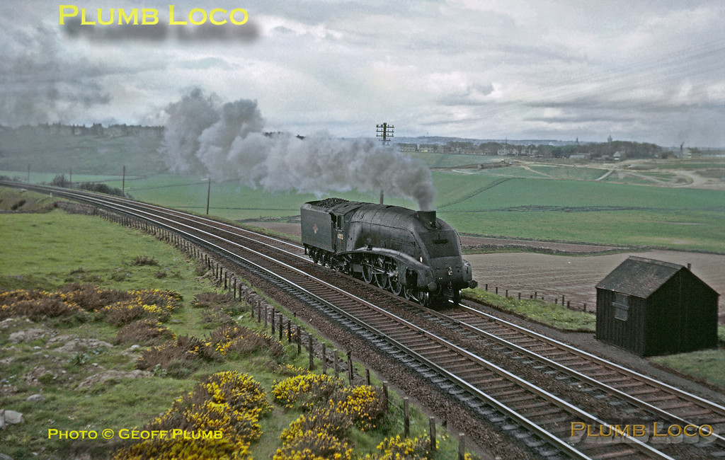 "From the Geoff Plumb Collection of original slides. LNER A4 4-6-2 No. 60012 ""Commonwealth of Australia"" is working light engine south from Aberdeen, approaching Nigg Bay. This seemed to be one of several light engine workings that day, whether this was normal I do not know! Friday 15th May 1964. Photo by Mike Burnett."