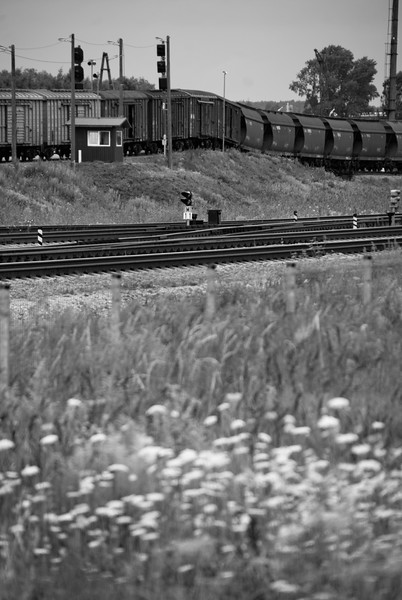 Hump shunting at the marshalling yard at the south end of Klaipeda. Walked to along paths of uncertain provenance. Past those who live their own shack life on the edge of town. German war graves in forgotten clumps of woodland.  Summer flowers and tall grass. And the sound of the controlled but explosive collision of reluctant battered wagons and the ensuing chain reactions.<br /> <br /> 27th July 2017