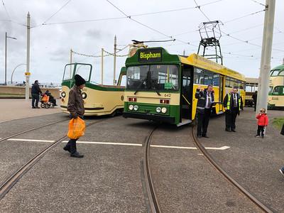 Centenary Tram No. 642