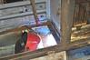 Class 20 battery box replacement.welding new bottom support. 23rd Feb 2013.
