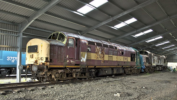 37413, 37403 in the new shelter.<br /> May 2011.