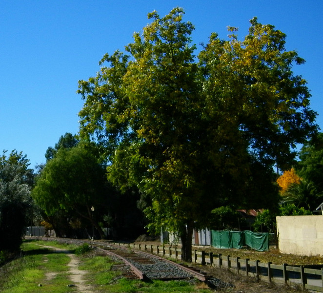 A look along the right of way down the tracks, toward downtown Piru (such as it is).