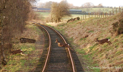 On 22nd January 2012 these three trespassers were seen running across the line at Sandford Mire. This photo was taken from a moving Shark brake van.