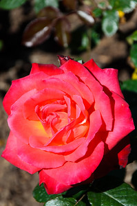 A rose by another name, is still a rose?