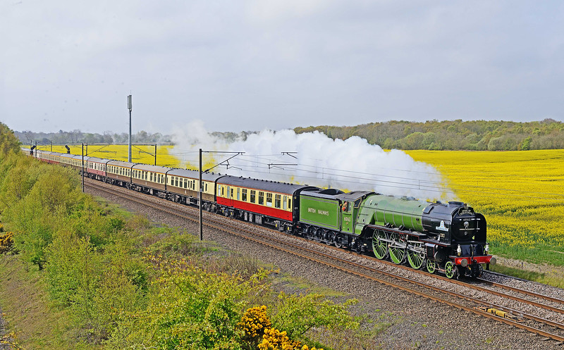 Appearing to be taking advantage of the recent increase in its maximum permitted speed to 90 mph Tornado cannot be far short of the limit as it romps north past Butterwell amidst the fresh greens of early Spring and against a backdrop of rapeseed flowers with its 13 coach Peterborough to Edinburgh charter on 1st May 2017.