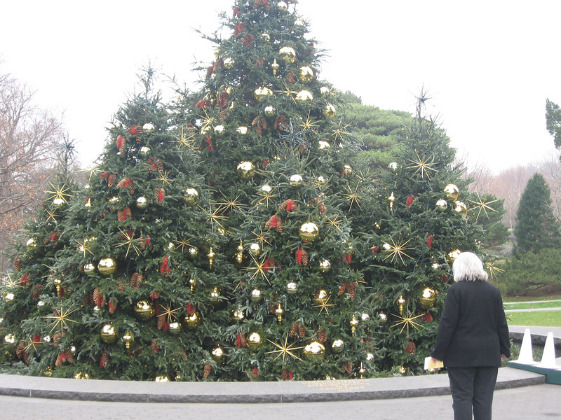 Ellen admiring Christmas Trees at New York Botanical Garden