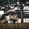 Just hangin' on is the name of the game.  Bull riding at the National Western Stockshow, Denver, CO.