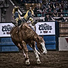 "The well practiced ""Flying W.""  Pro Bronco Buster riding at the National Western Stockshow, Denver, CO."