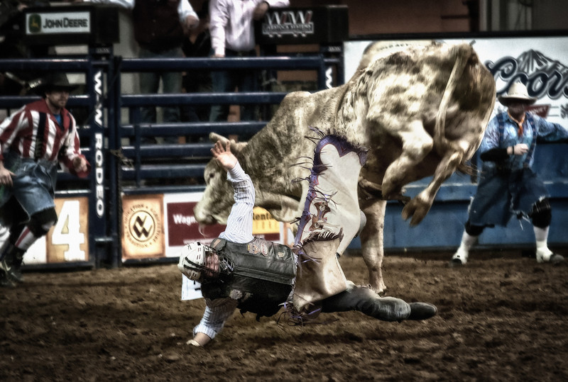 Bull rider getting an early exit off a nasty bull at the National Western Stockshow, Denver, CO.