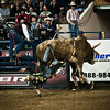 Pro Bull Riding from the National Western Stock Show, Denver, Colorado.