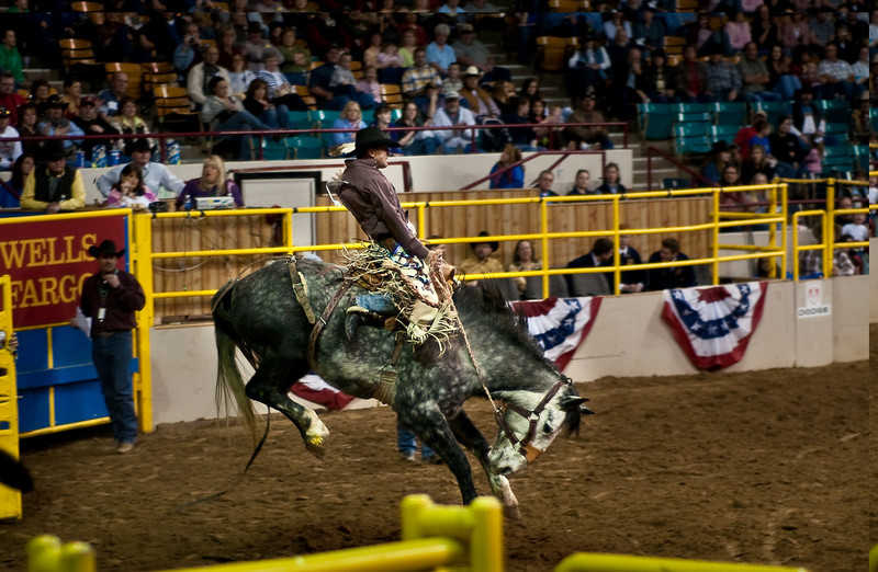 Bronco bustin' at the ,National Western Stockshow, Denver, Colorado,