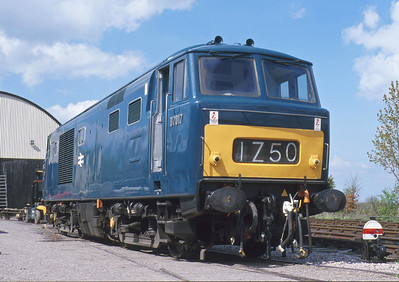 Blue window surrounds and a half yellow warning panel on D7017 illustrate an early BR livery for a Hymek, if not one that actually appeared on this loco in BR service.