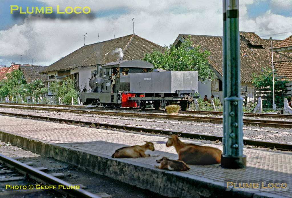 While the local goats rest in the shade of the station roof, 0-4-2skT No. B22 14 shunts a water tank wagon around the sidings at Gundih. Sunday 22nd July 1973. B22 14 was built by Hartmann in 1900, works No. 2562. Slide No. 11615.