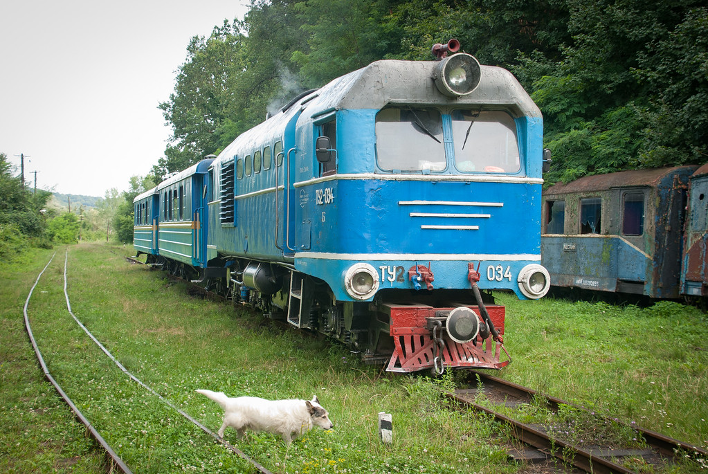Station dog which chases the train down the line for some distance