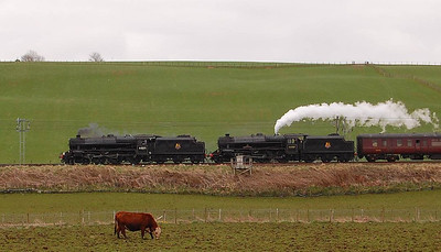 The cattle in the field between me and the train were decidedly uninterested, unlike some livestock I have seen in the past. 44871 and 45407 are seen slowing for the loop at Lockerbie on 23rd April.