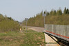 Dog watches mixed train head south from Moosonee 2004 June 12. On bridge abutment 1985 date marking.