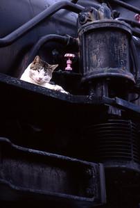 Rail Cat (not Chessie; resting on steam engine)