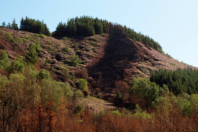 The colours of Miteside loop and Muncaster Fell after the fire on April 30th. 02/06/11.