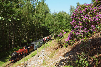 River Mite descends through Horsefalls Wood on the 1550 Dalegarth - Ravenglass, passing the magenta rhododendrons on the fellside. 02/06/11.