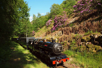River Esk passes the Horsefalls rhododendrons with the 1630 Dalegarth - Ravenglass. 02/06/11.
