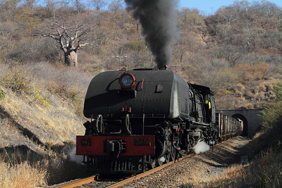 With an ancient Baobab tree in the background, engine 395 exits the only tunnel in Zimbabwe.