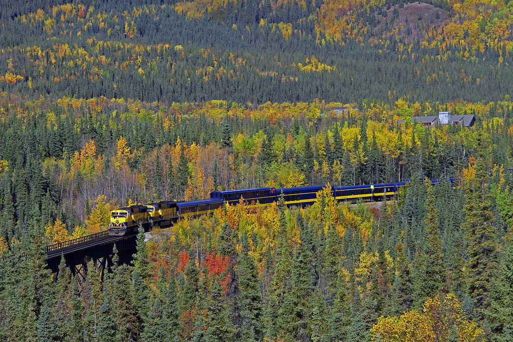 The fall colors were pretty remarkable this year in Alaska as seen here in Denali Park, AK. It wasn't long after this shot that the rains came and washed out the track.