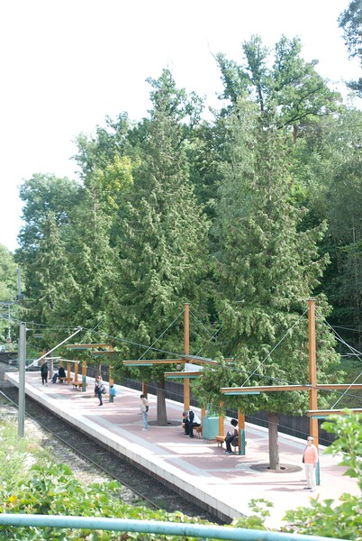 Green city - full scale trees on this light rail platform