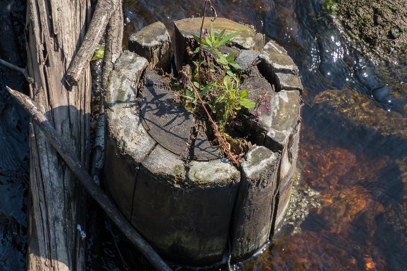Vegetation growing in cut off column of old railway bridge in Moosonee.