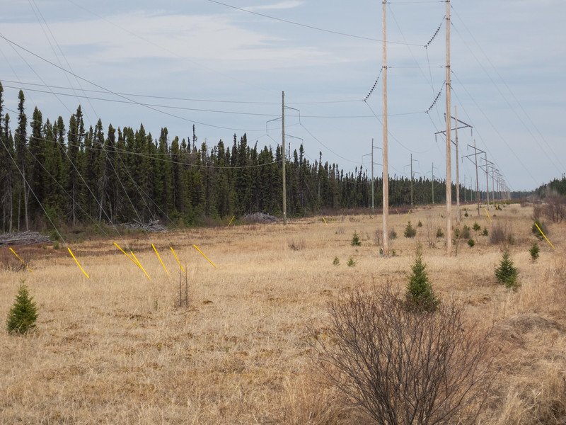 Transmission lines along the railway. North of Moose River bridge