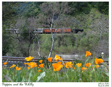Poppies in the foreground as the Niles Canyon Railway steams past across the canyon.  The modern UP tracks are visible behind the poppies, with the Alameda Creek flowing at the bottom of the canyon.  Niles Canyon Railway, Fremont, California, 21 March 2010