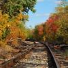 Railroad Tracks through the Trees