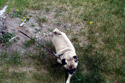 Hanna enjoying the park at the Bison range.