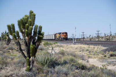 BNSF 8291 and coal train crests Cima Hill at Cima, CA, amongst the Joshua Trees