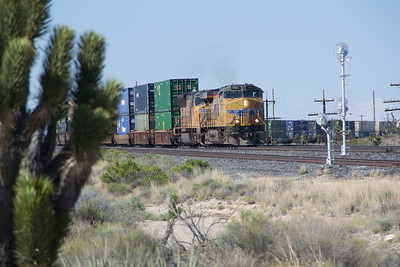 UP 7901 heads a hot Stack Train at Cima, CA