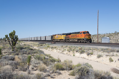 BNSF 8291 and coal train crests Cima Hill at Cima, CA, amongst the Joshua Trees