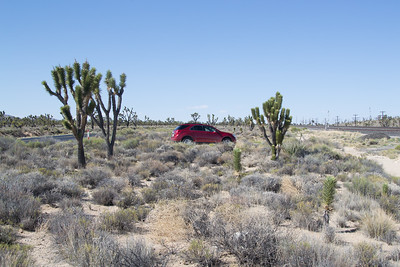 Rental car in amongst the Joshua Trees at Cima, CA