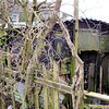 51xxxx LMS Vent Van Plank b/o - Hedgefields Farm, Poolend, Staffordshire 13.02.10   Andrew Jenkins